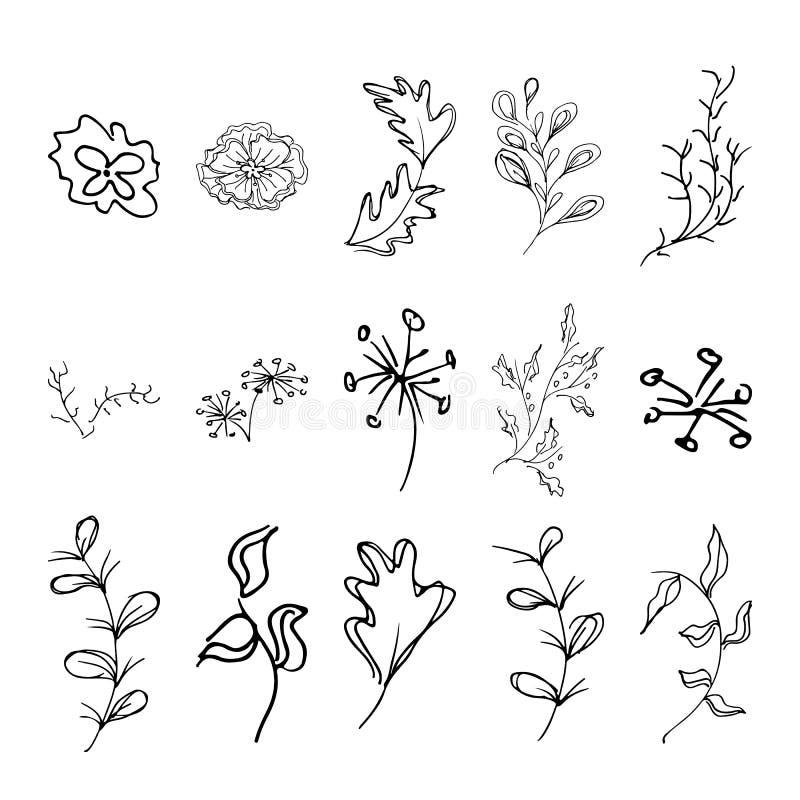 Collection florale d'ensemble d'automne Grande collection florale d'isolement sur le fond blanc Illustration d'isolement par vect illustration libre de droits