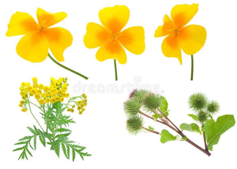 Download Collection flowers stock image. Image of summertime, freshness - 7897905