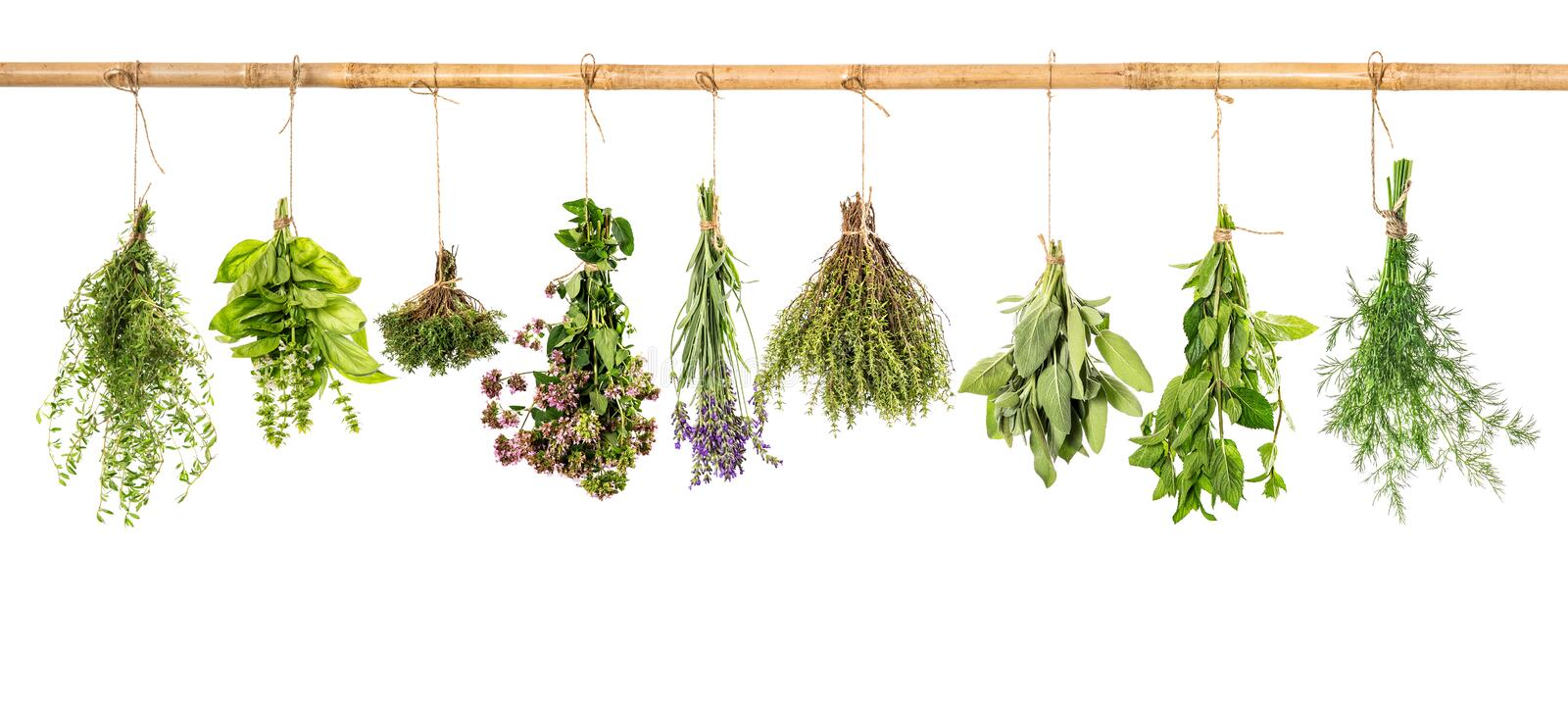 Collection of fresh herbs. Basil, sage, dill, thyme, mint, lavender royalty free stock images