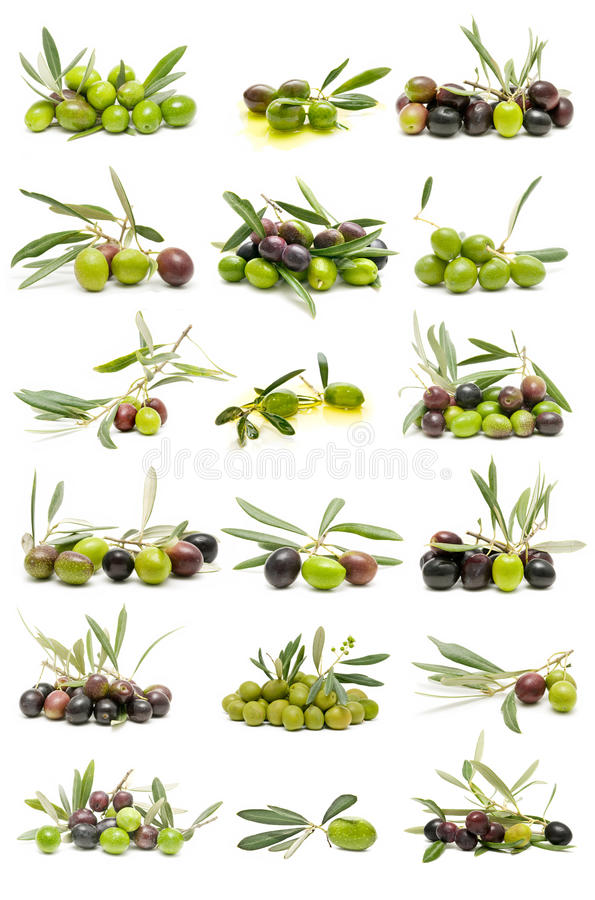 Collection of fresh olives stock photos
