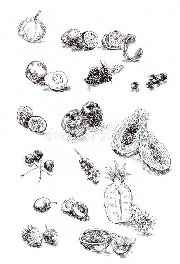 Collection of fruit and vegetables stock illustration
