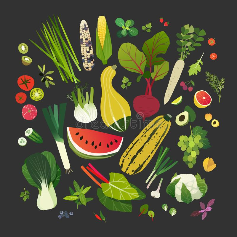 Collection of fruits, vegetables, leafy greens and common herbs royalty free illustration