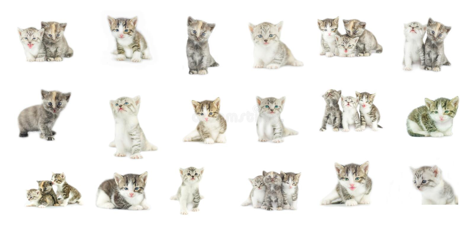 Different kittens collection isolated on white background royalty free stock images