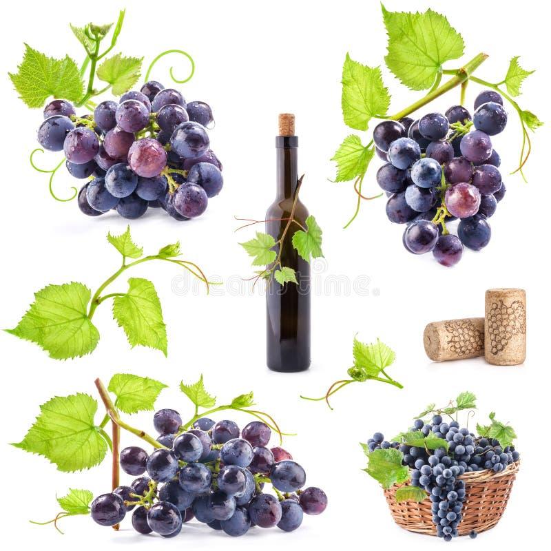 Collection of grapes stock photos