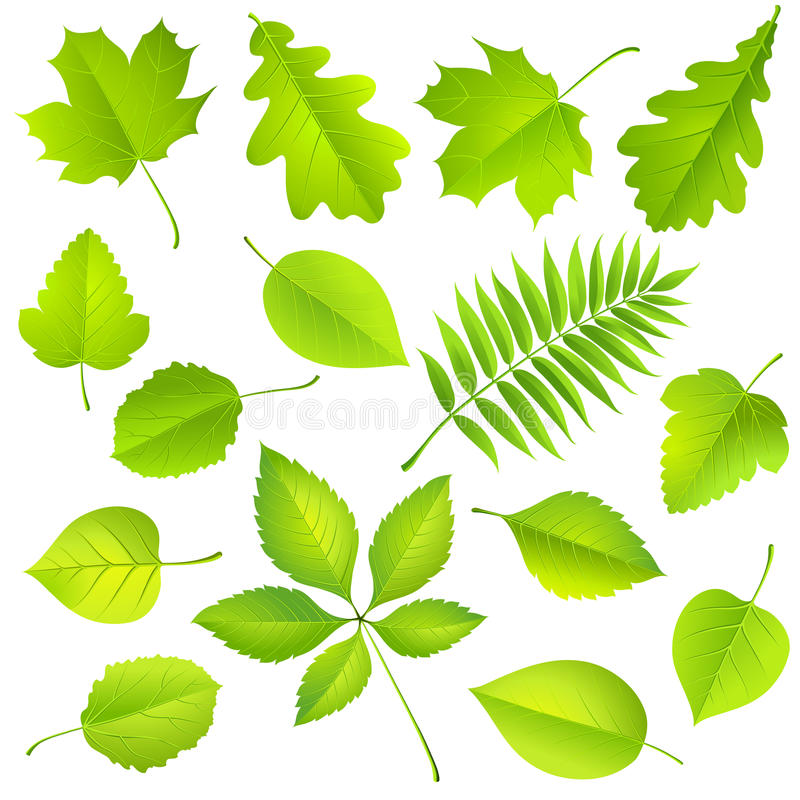 Collection of green leaves stock illustration