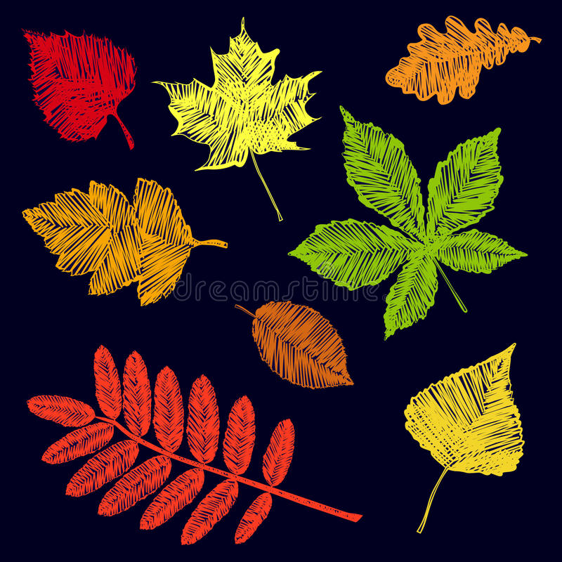 Collection of hand drawn colored autumn leaves stock photos