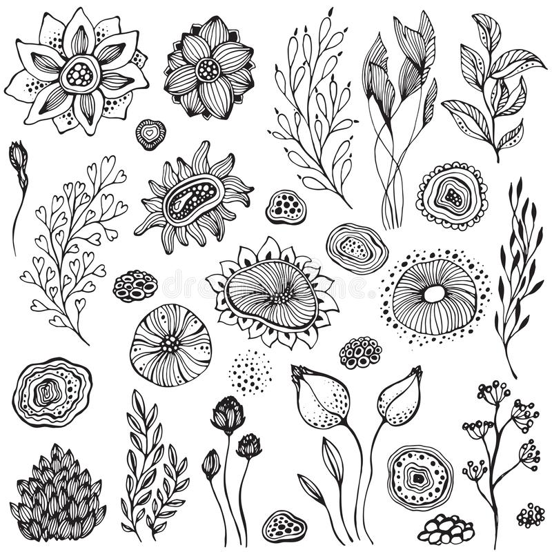 Collection of hand drawn fantasy nature elements. Flowers, plants, branches. Black and white vector set vector illustration