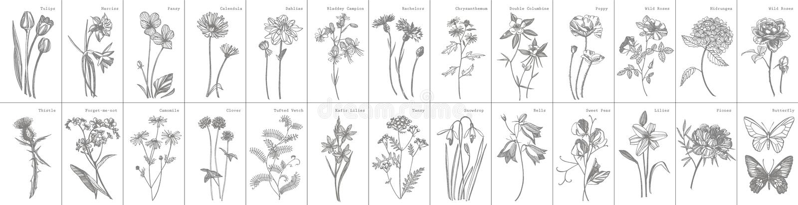 Collection of hand drawn flowers and herbs. Botanical plant illustration. Vintage medicinal herbs sketch set of ink hand. Drawn medical herbs and plants sketch stock photo
