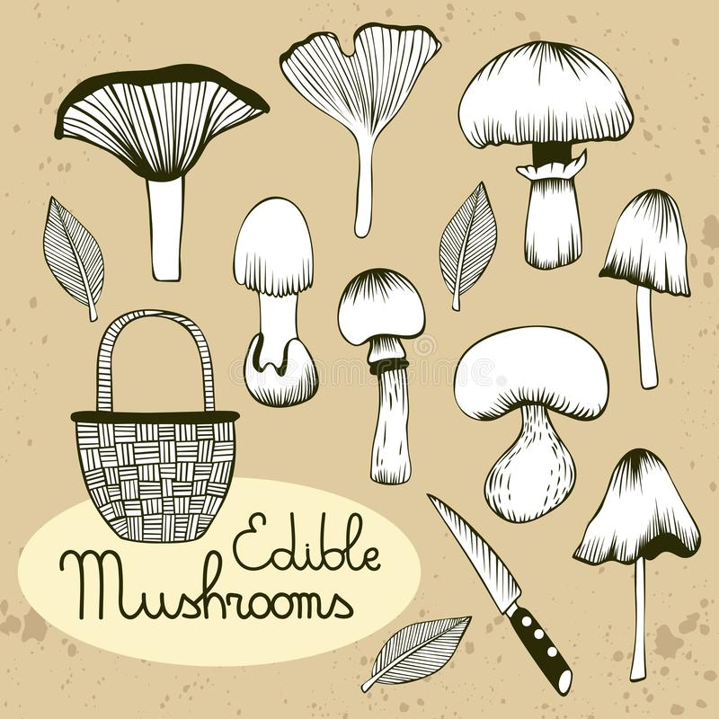 Collection of hand drawn vector mushrooms royalty free illustration