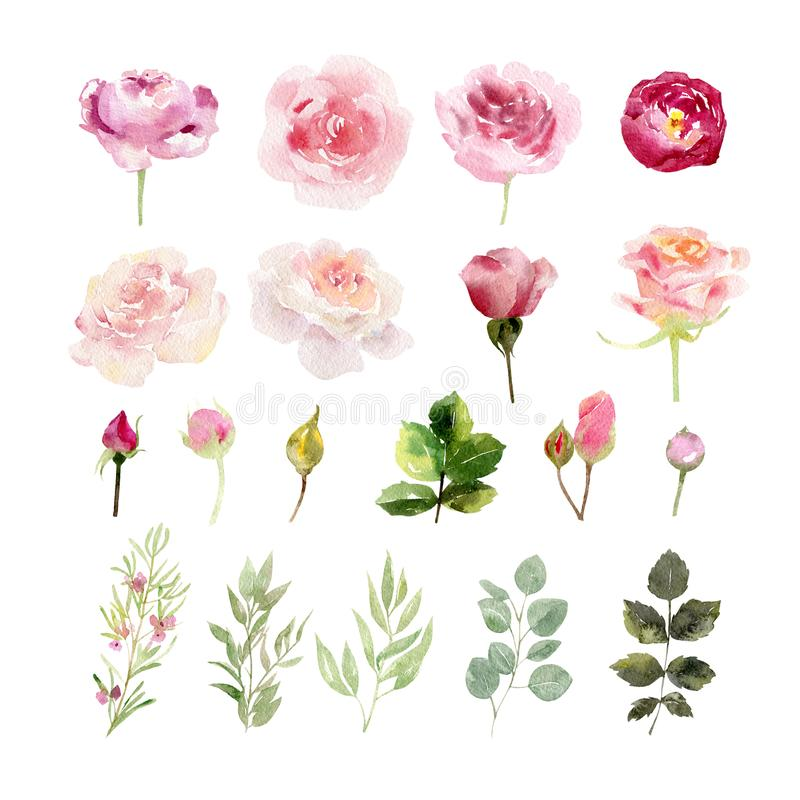 A collection of hand painted watercolor flowers roses stock illustration