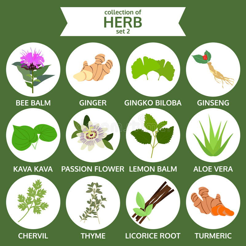 Collection of herb, healthy food vector, flat icon set two. Sticker stock illustration