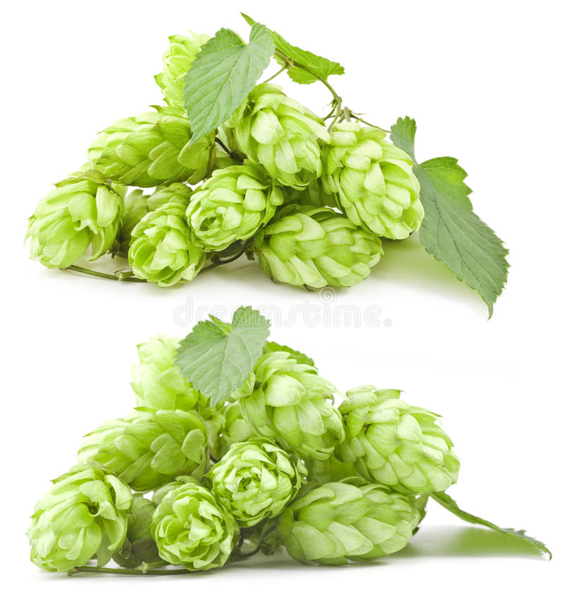 Download Collection Of Hops Royalty Free Stock Images - Image: 24259019