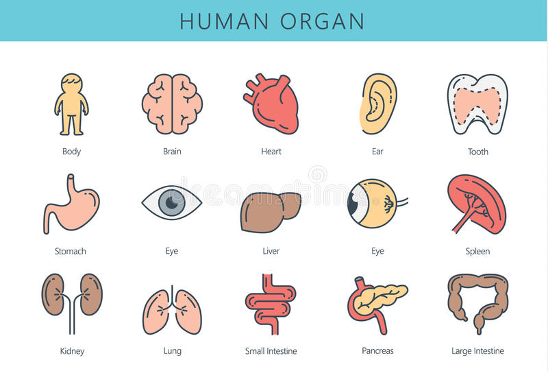 Collection humaine d'icône d'organe interne illustration de vecteur