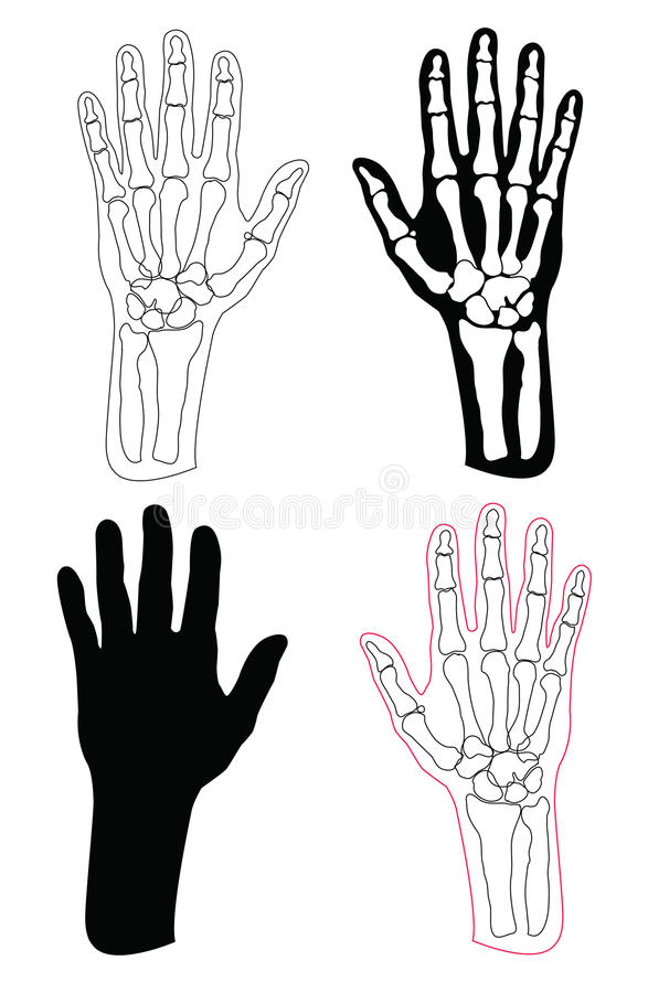 Collection Of Human Hands And Bones Royalty Free Stock Images