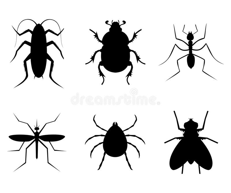 Collection insect stock illustration