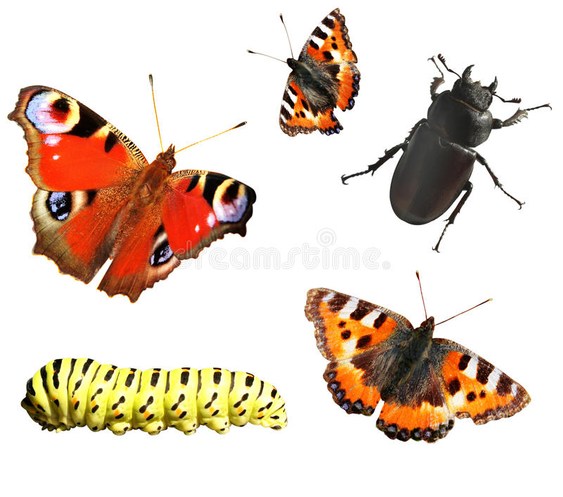 Download Collection of insects stock photo. Image of isolated - 26629638