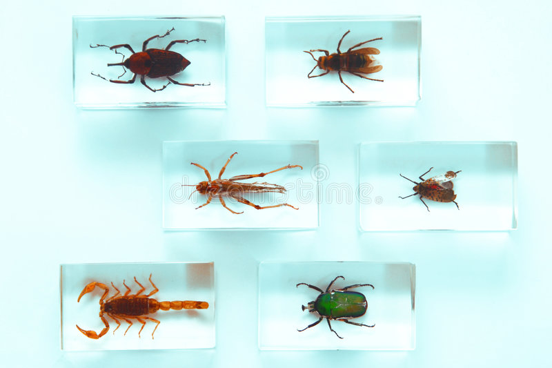 Collection Of Insects Stock Photos