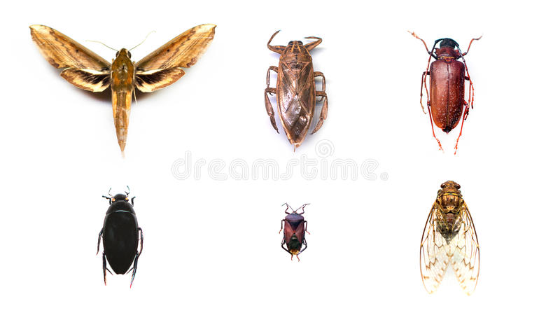 Collection of insects. stock images