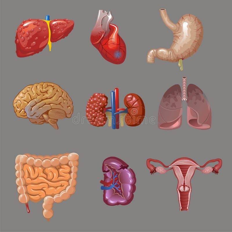 Collection interne d'organes humains de bande dessinée illustration de vecteur