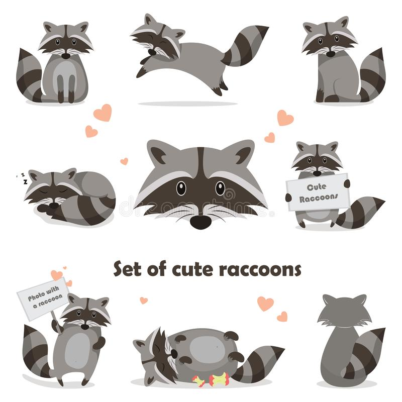 Collection isolated funny raccoon. Emotion little raccoon. Vector set cute raccoon. vector illustration