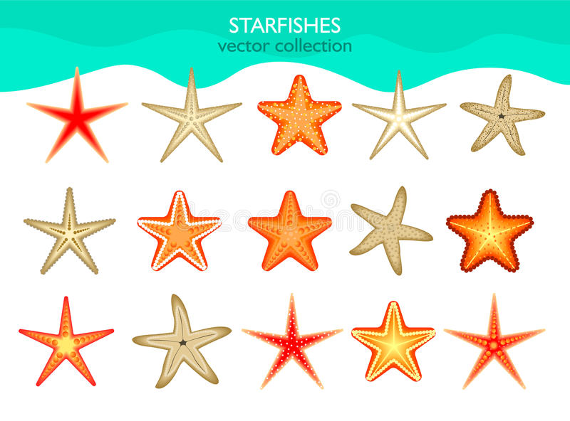 Collection of isolated starfish. Vector illustration. vector illustration