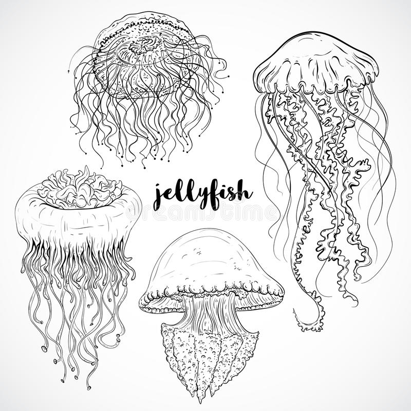 Jellyfish Line Art : Collection of jellyfish vintage set black and white
