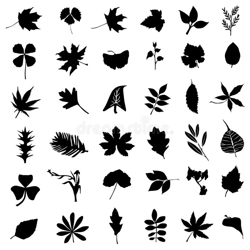 Collection of leaf and flower vector. In black vector illustration