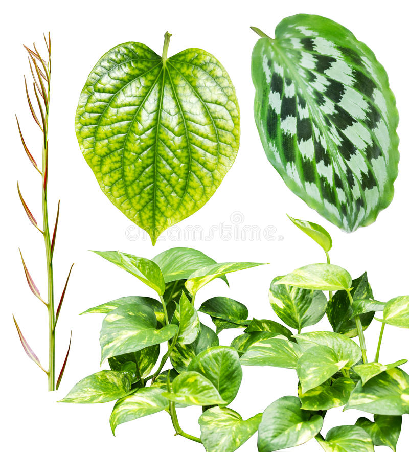 Collection of leaves isolated on white background. stock photo