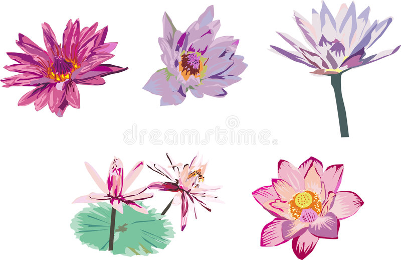 Download Collection of lotus stock vector. Image of botany, decoration - 3511918