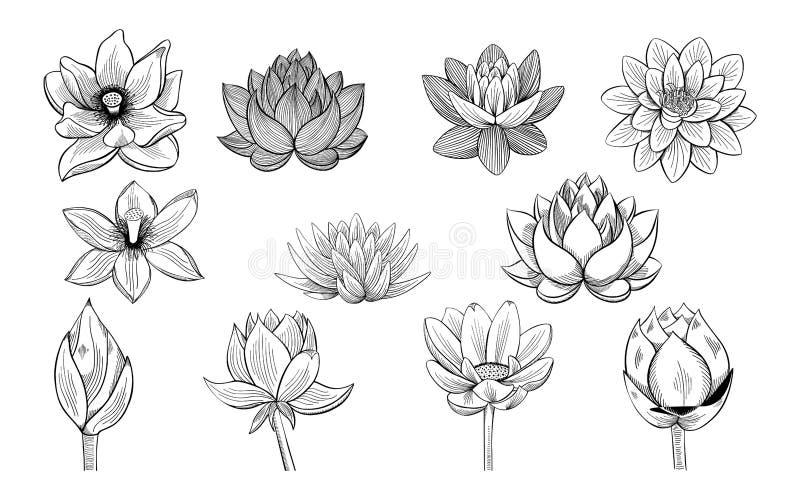 Lotus Flower Sketches Stock Illustrations 51 Lotus Flower Sketches Stock Illustrations Vectors Clipart Dreamstime