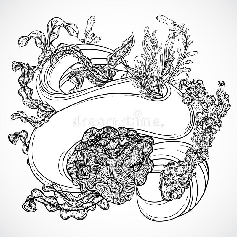Line Drawing Kelp : Collection of marine plants seaweed corals with ribbon