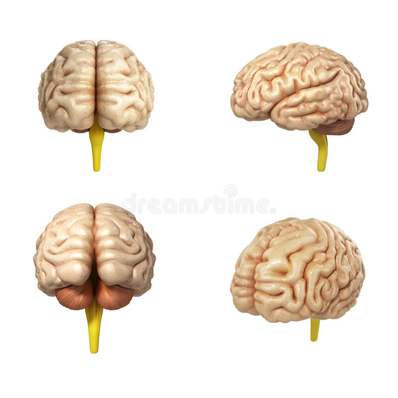 Collection of medically accurate illustration of the brain 3d re. Nder stock illustration