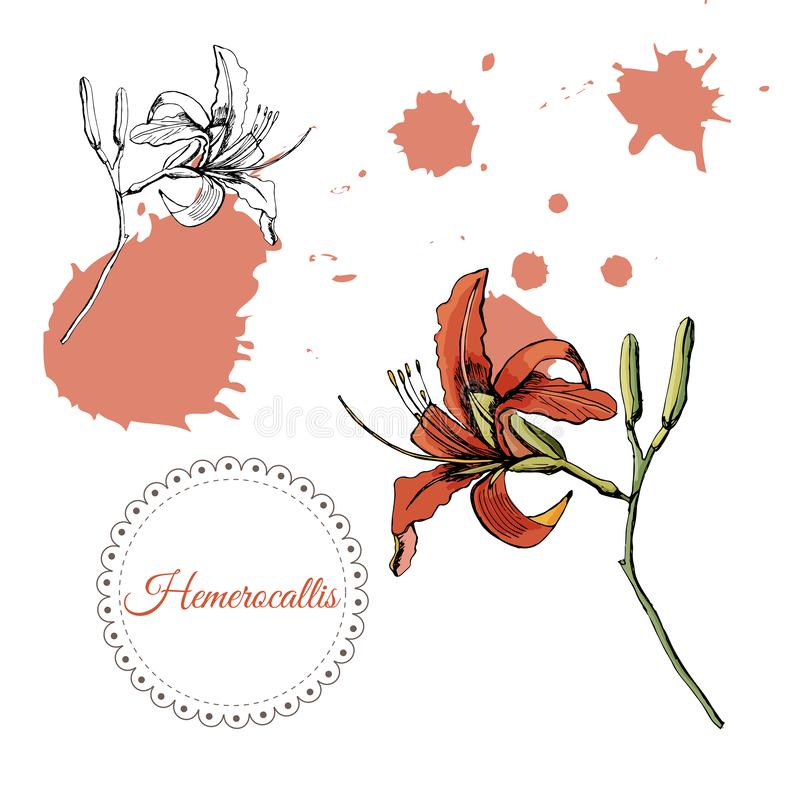 Collection with monochrome and color sketch of single lilly flowers  and abstract spots. Hand drawn ink and colored sketch vector illustration