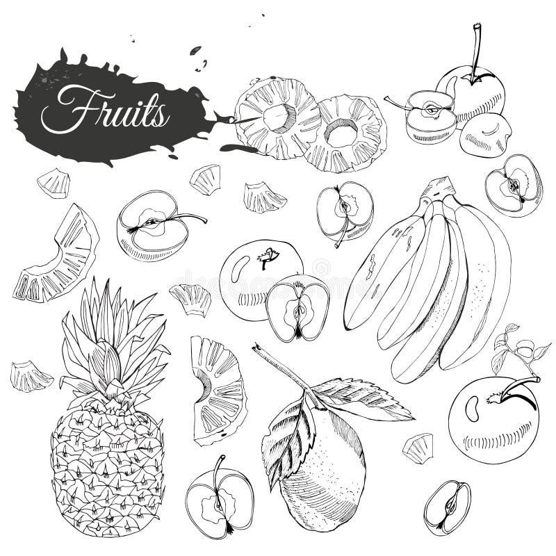 Collection monochrome de diff?rents fruits Elemets entiers et d?coup?s en tranches d'isolement sur le fond blanc Croquis tir? par illustration stock