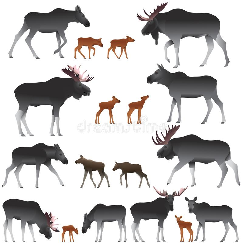 Collection of mooses also named elks and its cubs in colour image. Vector illustration stock illustration