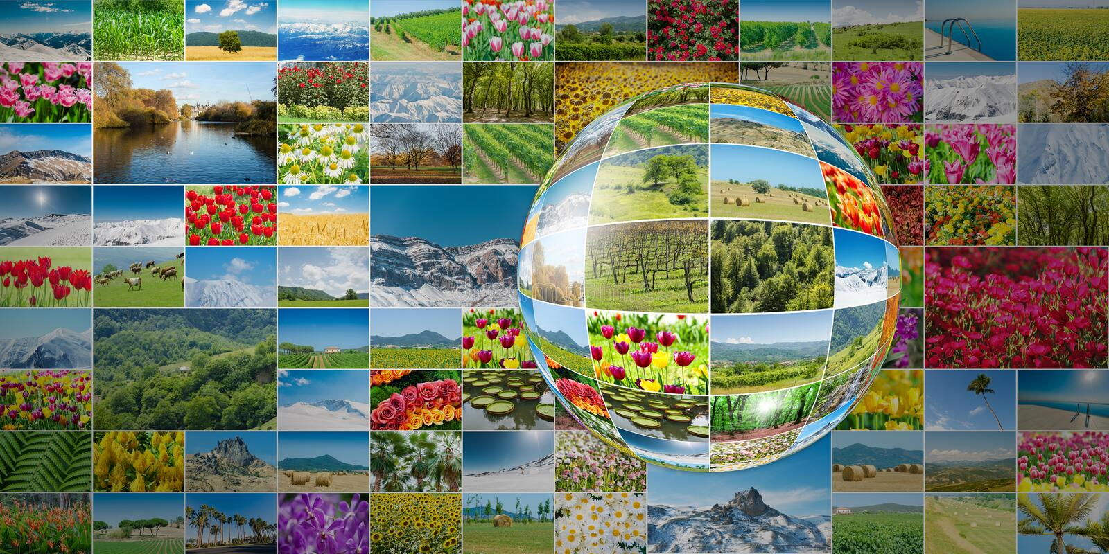 The collection of nature photos in collage concept stock photography