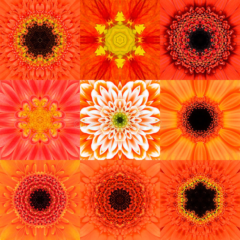 Collection of Nine Orange Concentric Flower Mandala Kaleidoscope. Collection of Nine Orange Concentric Flower Mandalas. Kaleidoscope Concentric design. Full stock image