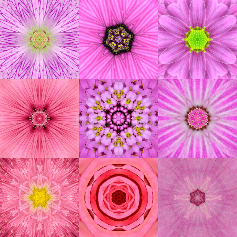 Collection of Nine Pink Concentric Flower Mandalas Kaleidoscope stock images