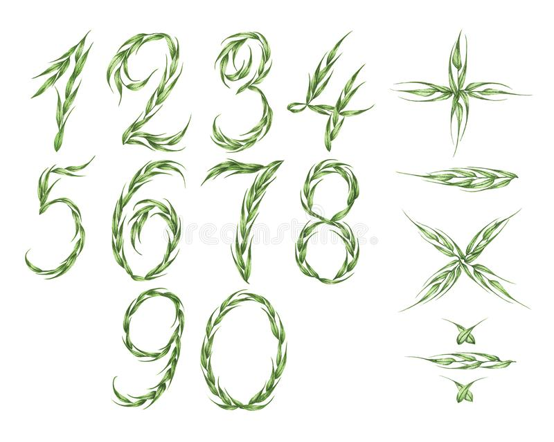 Collection of numbers and calculator icon from green leaves. Watercolor illustration. vector illustration