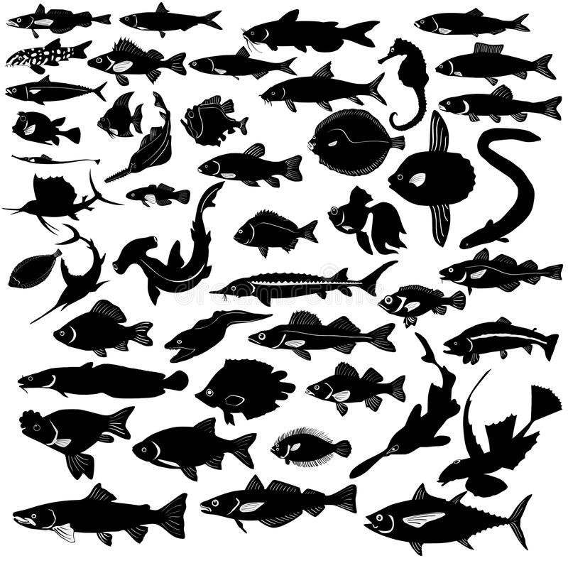 Free Collection Of Fishes Royalty Free Stock Photo - 14108395