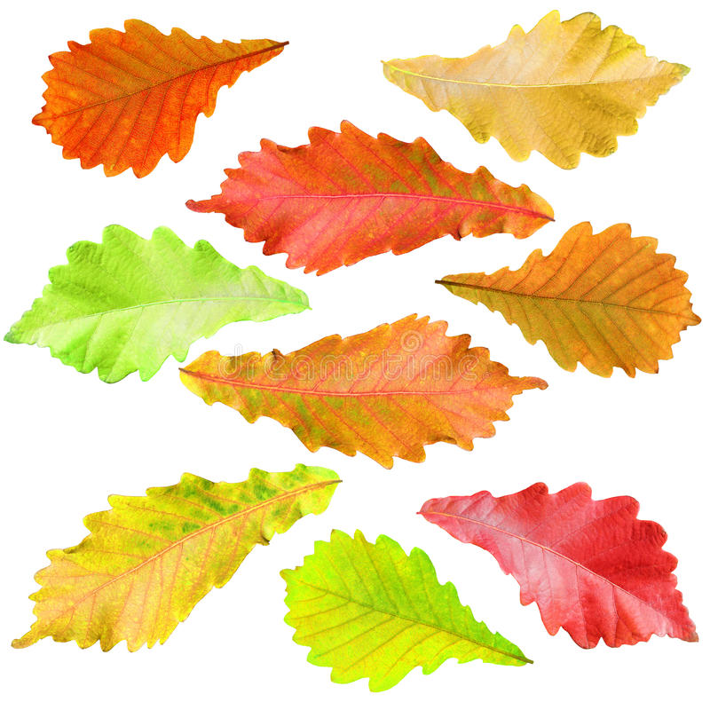 Free Collection Of Tree Leaves Royalty Free Stock Images - 27175129