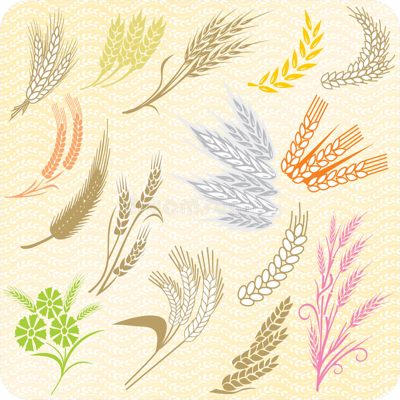 Free Collection Of Wheat Ears And Sheafs Royalty Free Stock Images - 15448159