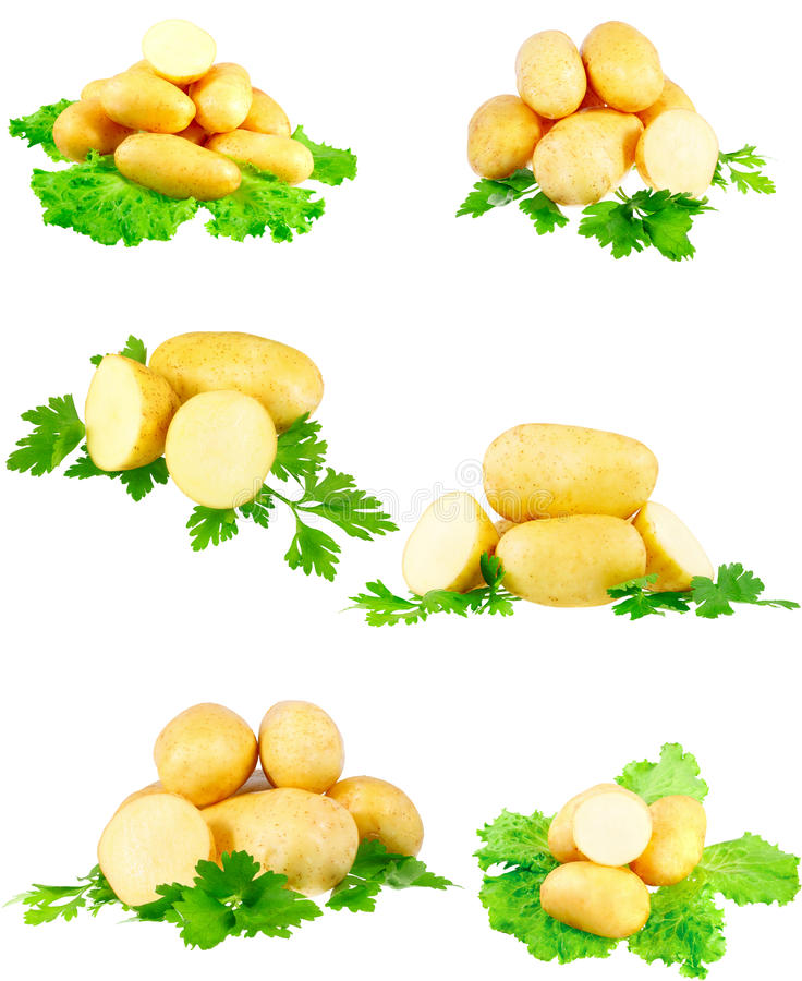 Free Collection Of Young Potatoes, Parsley . Isolated Stock Images - 23065754