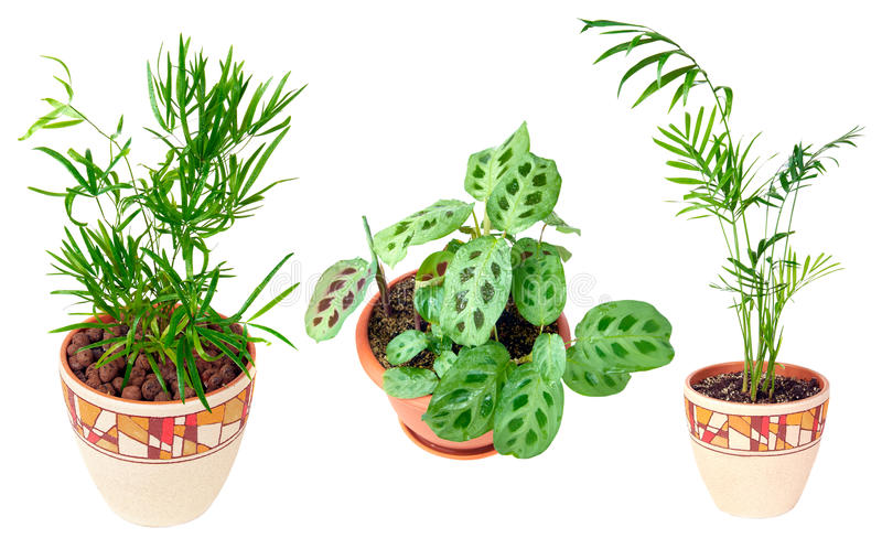 Collection ofdifferent studio-isolated plants royalty free stock photos