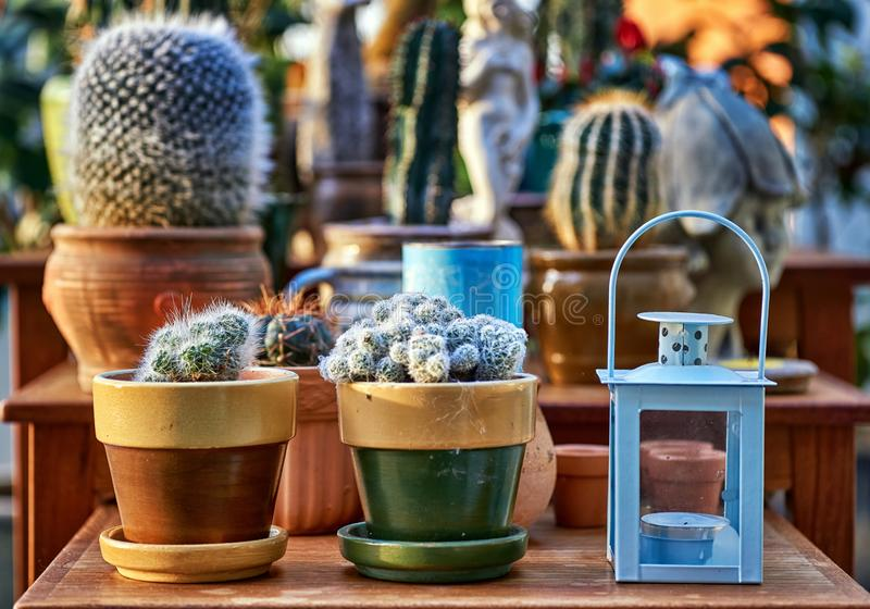 Collection of old retro cactus decorations stock image