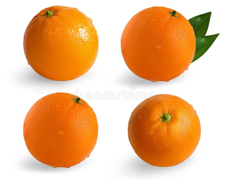 A collection of oranges isolated on white background.Wet orange isolated on white background. royalty free stock images