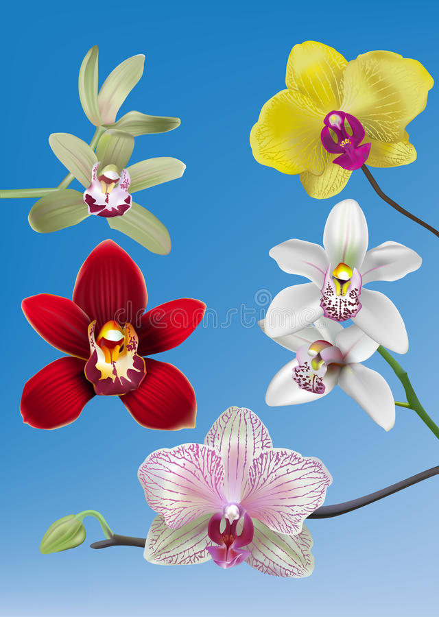 Collection of Orchid Vectors stock illustration