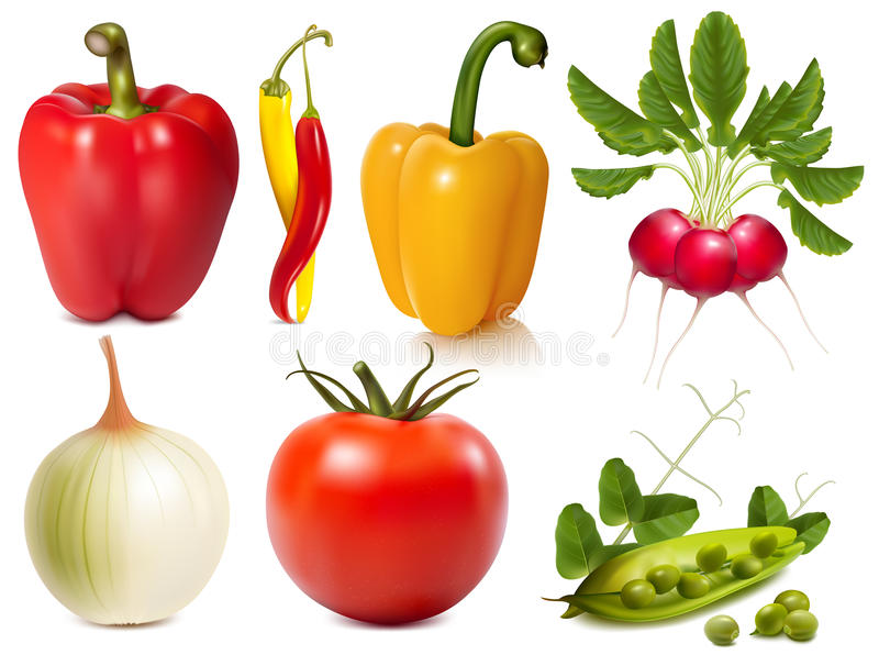 Collection of vector vegetables royalty free illustration