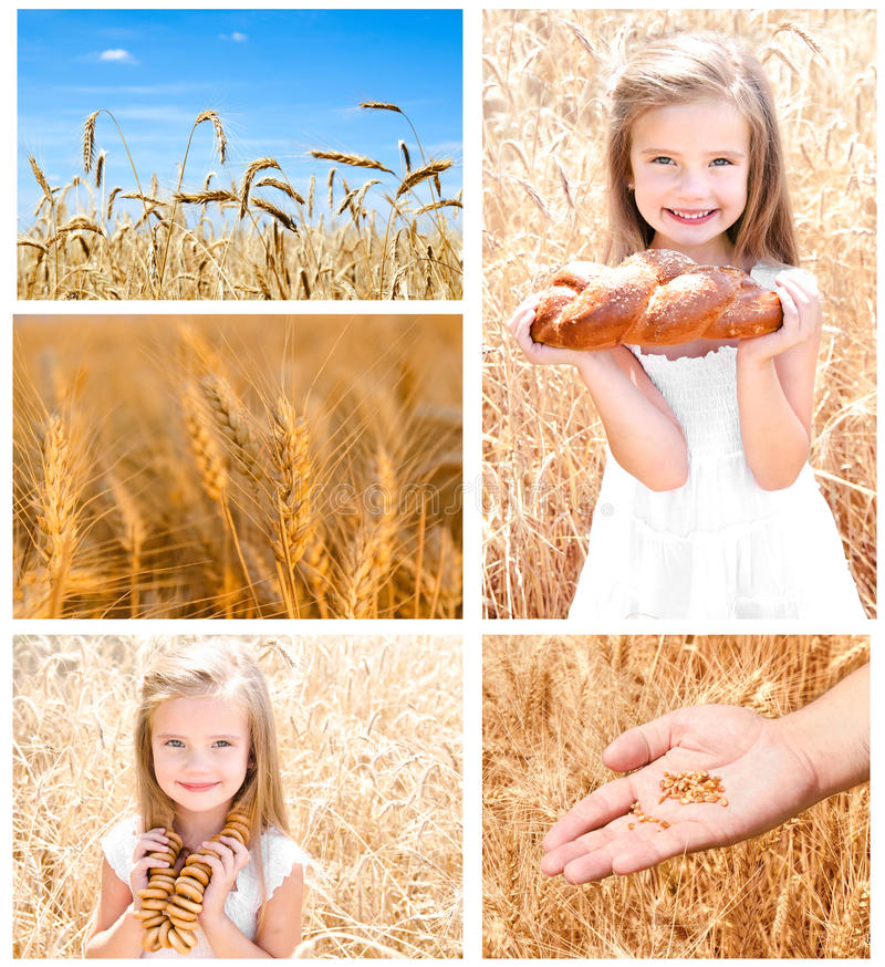 Collection of photos wheat field and little girl. With bun outdoor stock photos