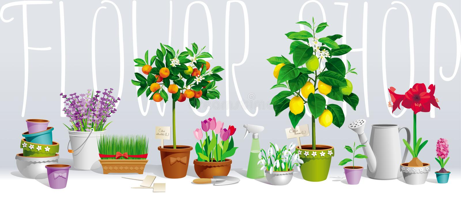 Collection of pot plants vector illustration